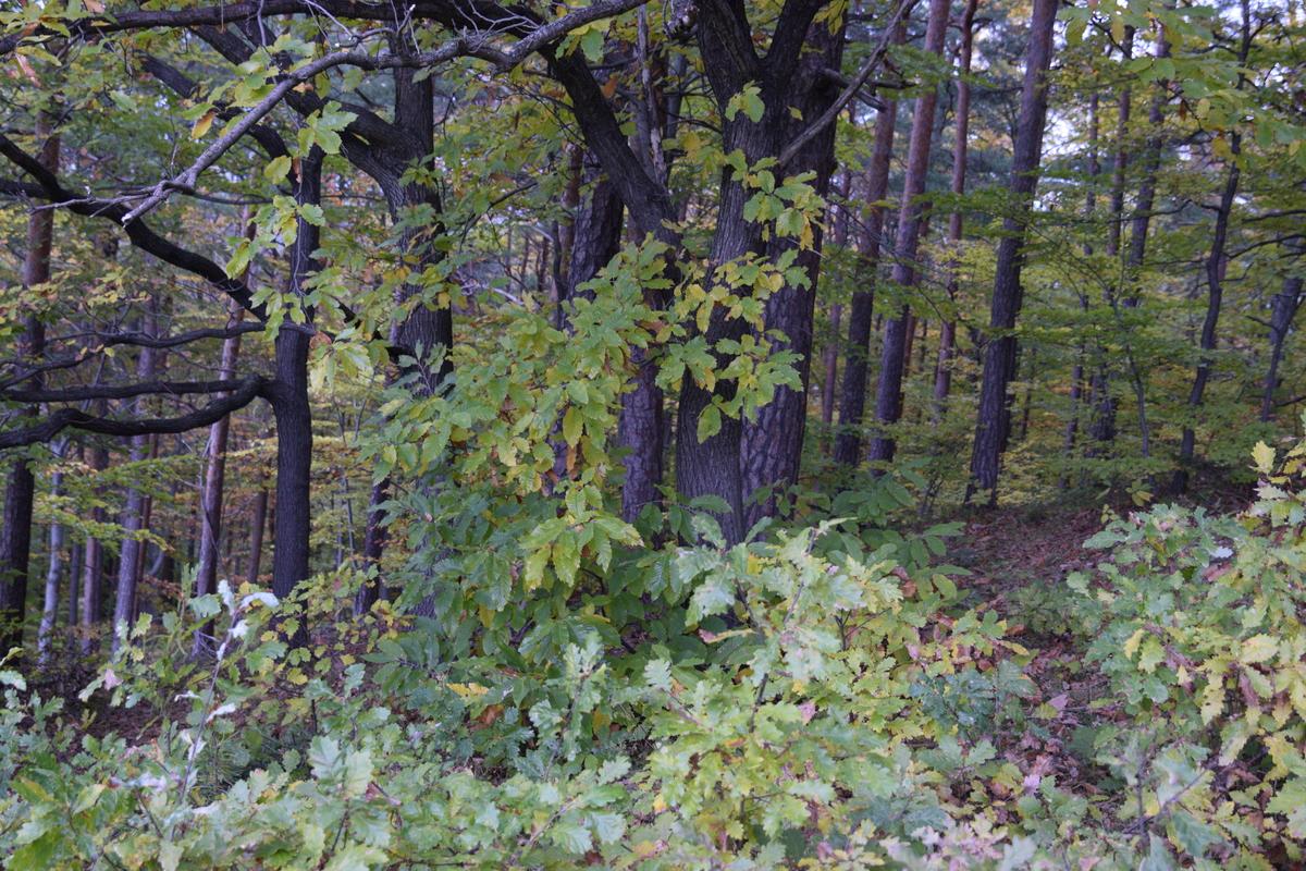 bäume wo man eckig schneiden kann